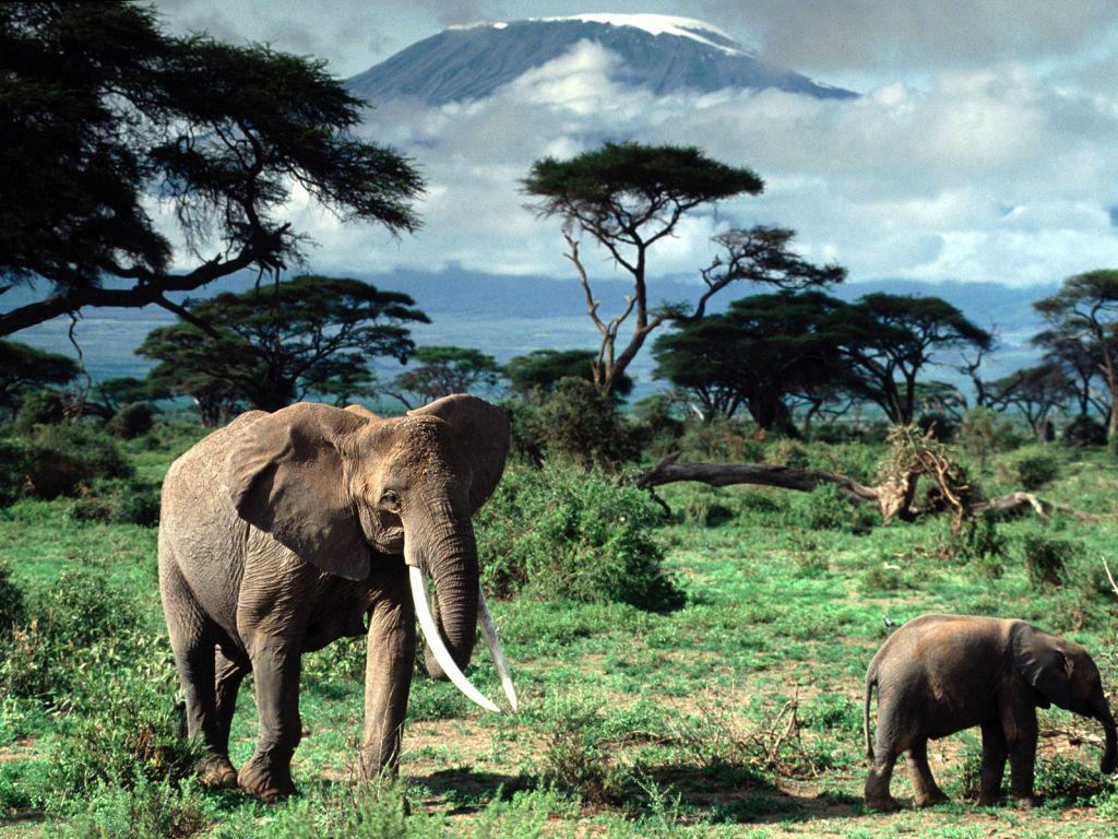 Об отдыхе в Африке