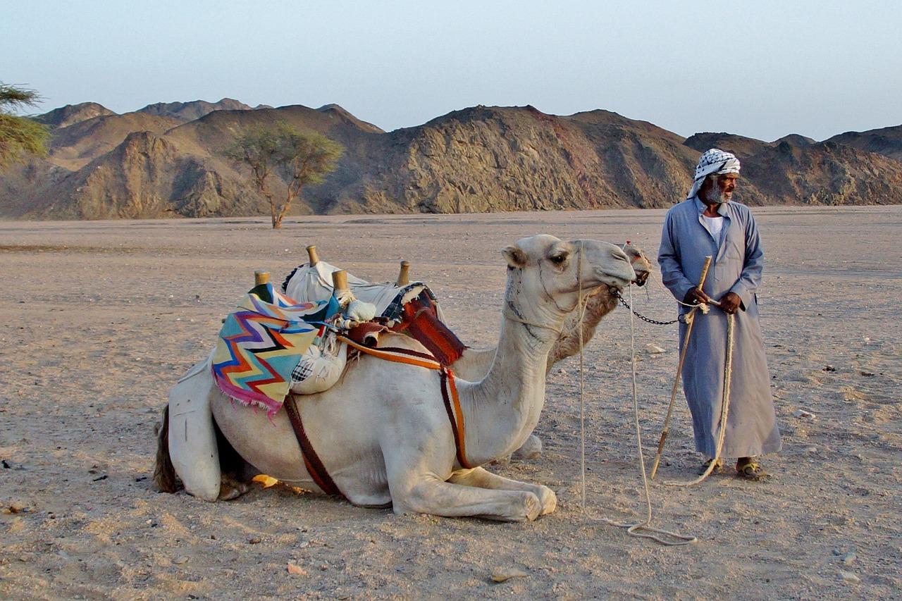 camel-1078123_1280