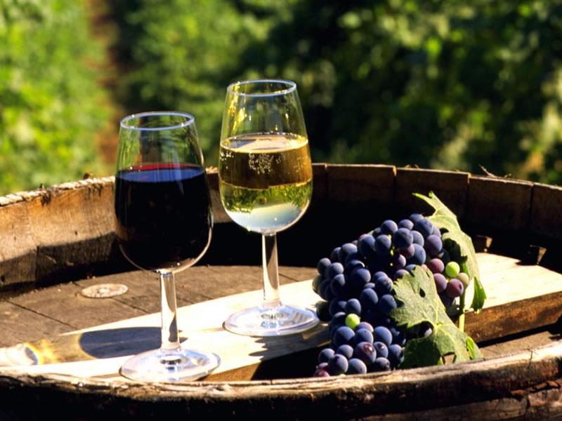 vino-saperavi-hvanchkara-mukuzani-kindzmarauli-chistoe-domashnee-razlivnoe-krasnoe-suhoe-gruziya