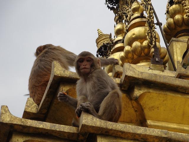nepal-Обезьяний храм